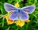 Digital 3D Art Butterfly