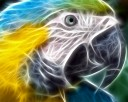 Digital 3D Art Macaw